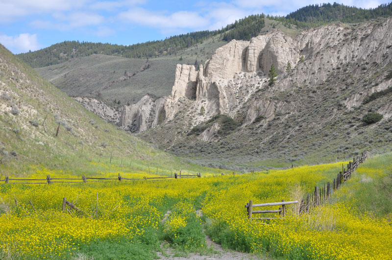 mustard seed meadow